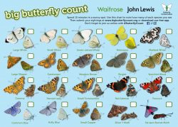 Butterfly Count Identiification Sheet
